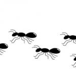 ジャカルタで至る所に行列を作る蟻。アリの駆除には「アリメツ」が効く!