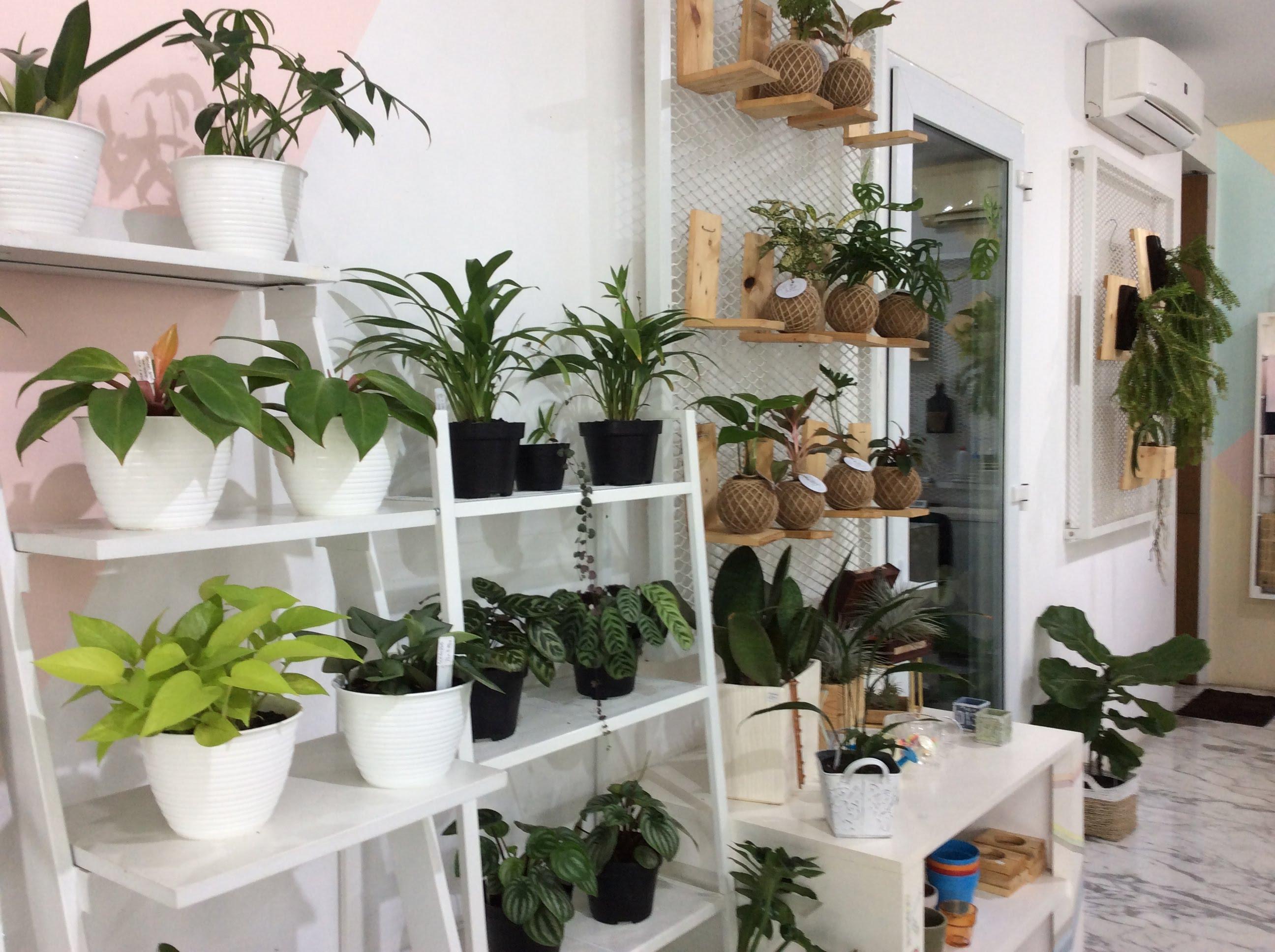 素敵な観葉植物&カフェ空間。ジャカルタでお花を買うならLiving with L.O.F