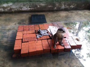 BFC Mini Farm(Bintaro Farm Center)でハリネズミ達との動物ふれあい体験