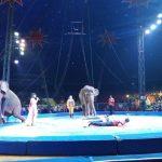 インドネシアのサーカス団 オリエンタルサーカスに行ってみた